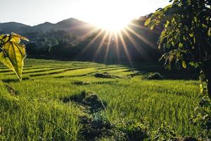 paesaggio risaia in asia, vista aerea delle risaie foto