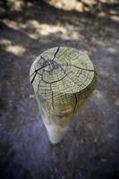bastone di legno per terra foto