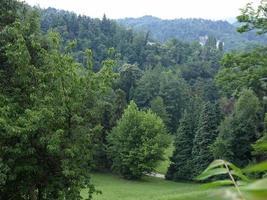 alberi su una collina foto