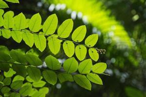 sfondo di natura foglia verde. foto