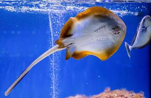 immagine subacquea di pesci nel mare foto