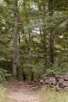 foresta verde piena di alberi foto