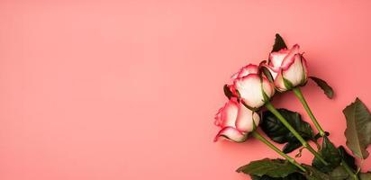 rose rosa su sfondo rosa solido foto
