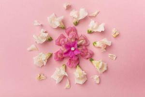 bella composizione piatta fiori foto