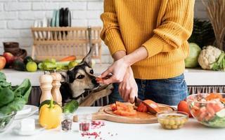mani femminili che preparano insalata e danno un pezzo di verdura a un cane foto