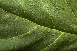 i dettagli delle trame delle piante da interno foto