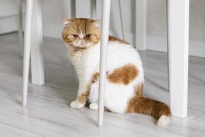 simpatico gatto che si diverte a casa foto