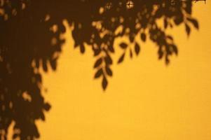 guarda le foglie con le ombre della luce del giorno foto