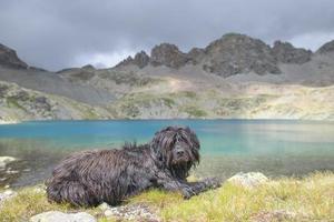 cane da pastore di montagna vicino a un lago alpino foto