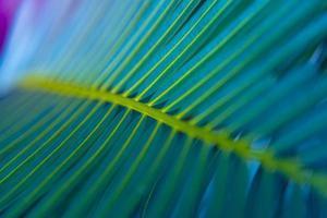 il bellissimo fogliame verde tropicale astratto si concentra solo foto