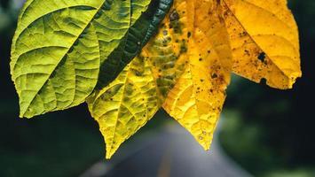 foglia d'autunno nella foresta verde, strada per la foresta foto