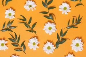 composizione di foglie di camomilla. risoluzione e bella foto di alta qualità