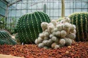 belle piante grasse e cactus in giardino. foto