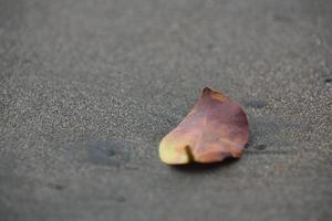 foglie secche sulla spiaggia foto