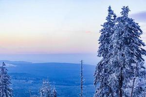 tramonto foresta paesaggio panorama alberi ghiacciati montagna brocken germania. foto