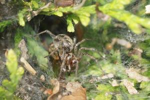 ragno nel web foto
