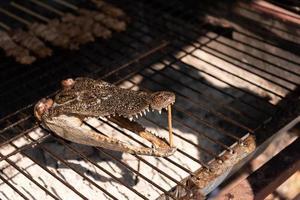 primo piano della testa di coccodrillo arrostita su una stufa a carbone foto