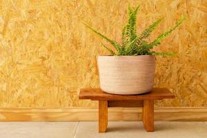 una felce in un vaso intrecciato su una parete di legno marrone chiaro foto