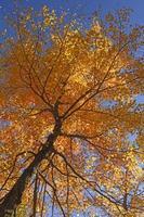 guardando un acero in tutti i colori dell'autunno foto
