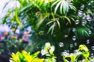 bolle d'acqua che galleggiano e cadono su foglie verdi foto