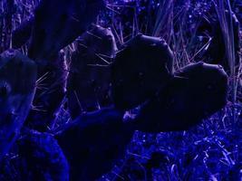 trama di piante blu foto