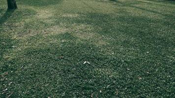 sfondo texture erba verde nel parco. tono scuro foto