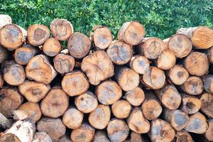 pila di legno tronco d'albero ceppo nella foresta foto