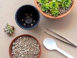 disposizione piatta di piante succulente e attrezzature da giardinaggio foto