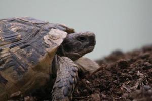 una tartaruga in città foto