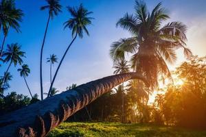 silhouette palme da cocco vicino alla spiaggia al tramonto. foto