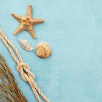 stelle marine e conchiglie con copia spazio foto
