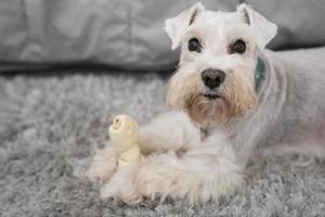 simpatico cane con guinzaglio blu all'aperto foto