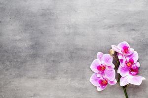 orchidea di bellezza su uno sfondo grigio. scena termale. foto