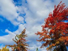 cieli in autunno a Redmond, o foto