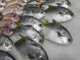 chiudere il pesce fresco crudo che si raffredda sul ghiaccio nel mercato dei frutti di mare in stallo foto