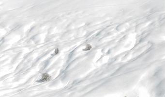 montagne con piste da sci e alberi da neve foto