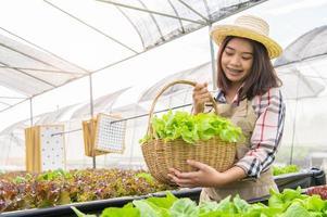 giovane coltivatore biologico di coltura idroponica asiatica che raccoglie insalata di verdure nel cesto con serra vivaio. stili di vita e affari delle persone. concetto di giardiniere dell'ambiente di coltivazione e agricoltura indoor foto