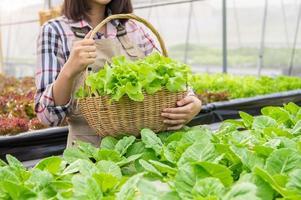 giovane coltivatore biologico di idroponica asiatica che raccoglie insalata di verdure foto