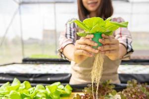 giovane coltivatore biologico di idroponica asiatica che raccoglie insalata di verdure e dà in serra vivaio. stili di vita e affari delle persone. concetto di giardiniere dell'ambiente di coltivazione e agricoltura indoor foto