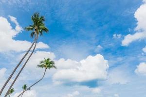 bellissima spiaggia tropicale con palme foto