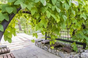 bellissimo parco e cancello con piante. giardini botanici perdana malesia. foto