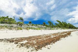 alghe rosse a punta esmeralda, playa del carmen, messico foto