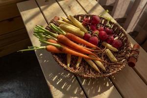 il sole del pomeriggio splende sui ravanelli rossi e arancioni nel cestino foto
