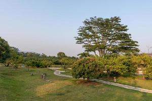 alberi alti con sguardi strani nel parco foto