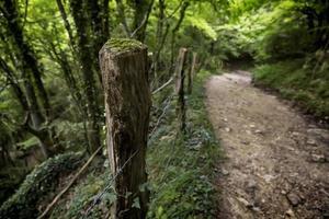 sentiero con legno nel bosco foto