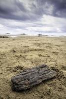 ceppo di legno sulla spiaggia foto