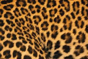 fantasie colorate e pelle di leopardo. foto