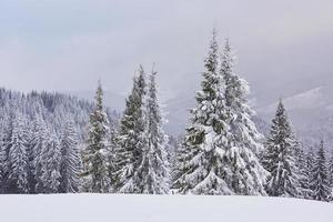 paesaggio invernale fatato con abeti e nevicate. concetto di auguri di natale foto