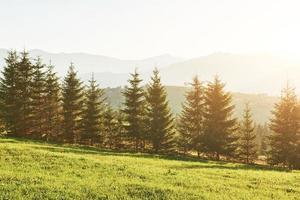 bellissimo paesaggio autunnale dell'alba nelle montagne dei carpazi, viaggio in europa, ucraina occidentale, parco nazionale dei carpazi, mondo meraviglioso, sfondo del paesaggio di carta da parati foto