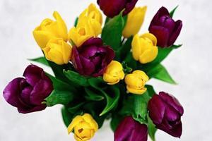 bouquet di fiori di tulipano primaverile viola e giallo su uno sfondo chiaro di close-up. copia spazio. festa della mamma. giornata internazionale della donna. foto